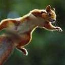 Squirrelish