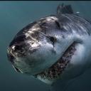 Sharkie405